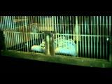 Mark Ronson - Stop Me (Video) ft. Daniel Merriweather