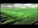 Ферма автомат по выращиванию травы. United Fodder Solution automatic paddock