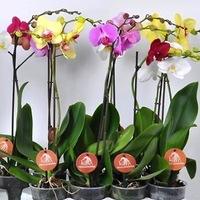 Комнатные цветы купить в самаре