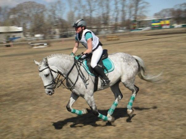 «Федерация конного спорта