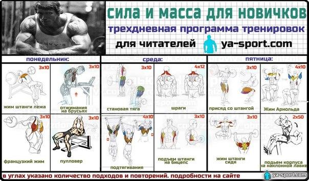 Программа тренировки в тренажерном зале для начинающих