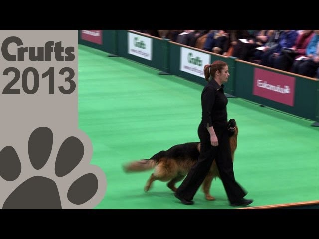 Obedience Dog Championships - Day 3 - Crufts 2013 (Jenny Gould Zankanja Bitter 'N' Twisted)