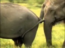 Любовь и секс у животных  2014