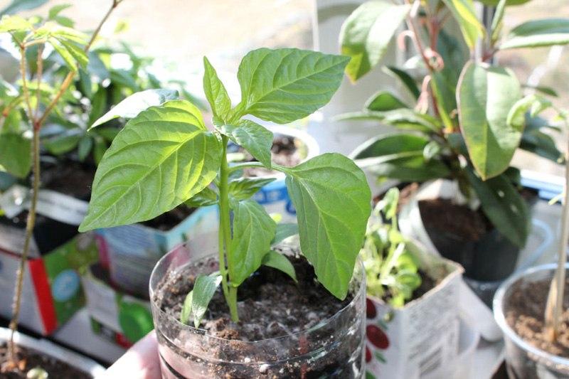 Апрель - как упростить весенние работы для садоводов, отрывок из книги Г. А. Кизима