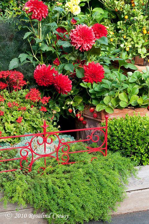 Что делать, если нет некоторых растений для цветника