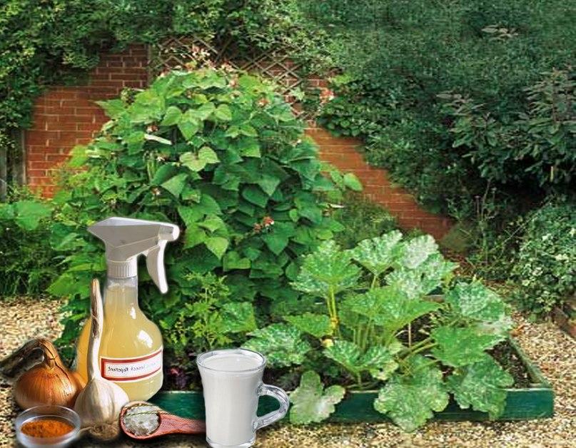 Защита растений от заболеваний народными средствами