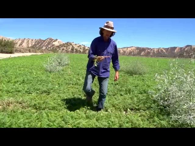 Когда органическое сельское хозяйство приносит вред!