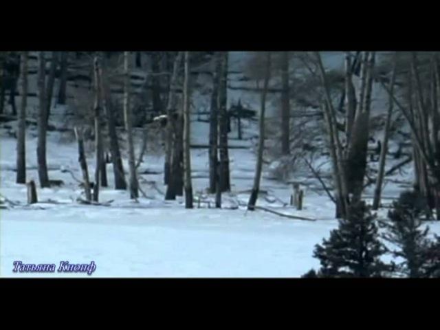 Александр Малинин - Волчья стая