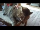Очень злые кошки