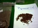 Выращивание шпината Утеуша. Высокоурожайный сорт.