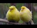 Blue Canary - Marisa Fiordaliso&Enzo Amadori