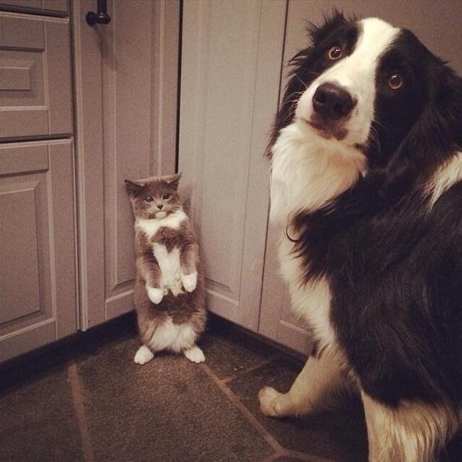 Коты, которых застукал хозяин