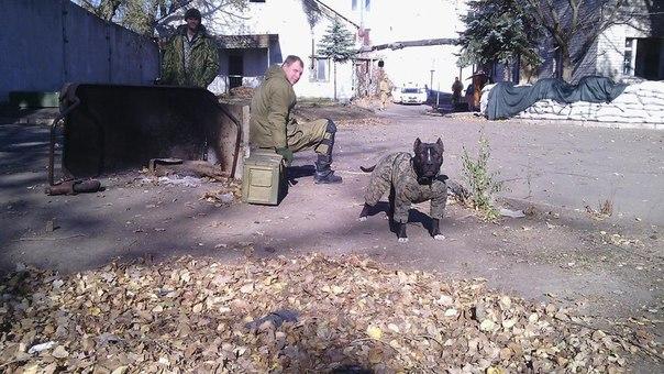 """Сводка за 30 ноября от обозревателя с позывным """"Ян""""."""