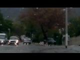Подборка видео Животные на дороге! Человеческая доброта!!