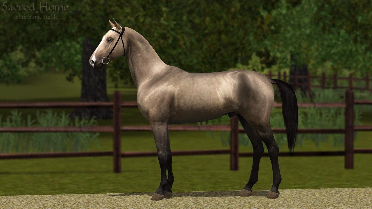 Регистрация лошадей в RHF 2 - Страница 5 IrHj1y8D8jo