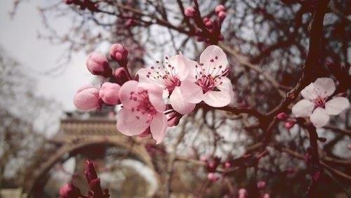 Париж весной, Франция весной