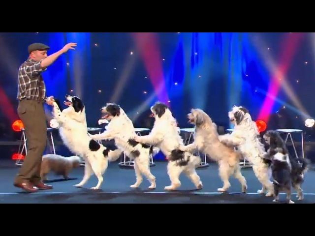 WOLFGANG LAUENBURGER - DRESSAGE CHIENS - LE PLUS GRAND CABARET DU MONDE