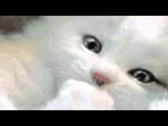 я тебя люблю! (тебя словно белого котеночка) ja tebja ljublju!