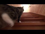 Cat going up the stairs