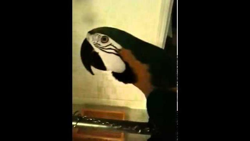 Попугай говорит WTF