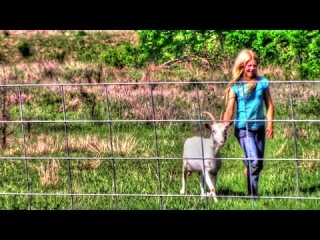 Training Goats For An Electric Fence | Homestead Kids
