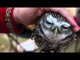 Lovely Owl hiboux - Happeulle - гладит сову (совенок)