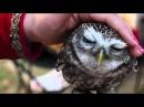 Lovely Owl hiboux - Happeulle - гладит сову (совенок)