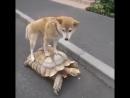 Покатай меня большая черепаха