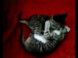 У котят шило в одном месте - не могу сделать ни одного фото!