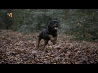 Moordvrouw. S03E04. De hond van de heide.