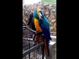 Попугай при входе в парк