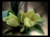 Nana Mouskouri - Plaisir d'amour