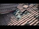 Família ouviu um barulho estranho vindo do telhado e quando olharam na telha nem acreditaram!