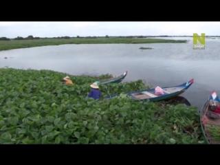 Тайны мировых озер / La vie secrete des lacs (2015)   03. Озеро Тонлесап. Бьющееся сердце Камбоджи