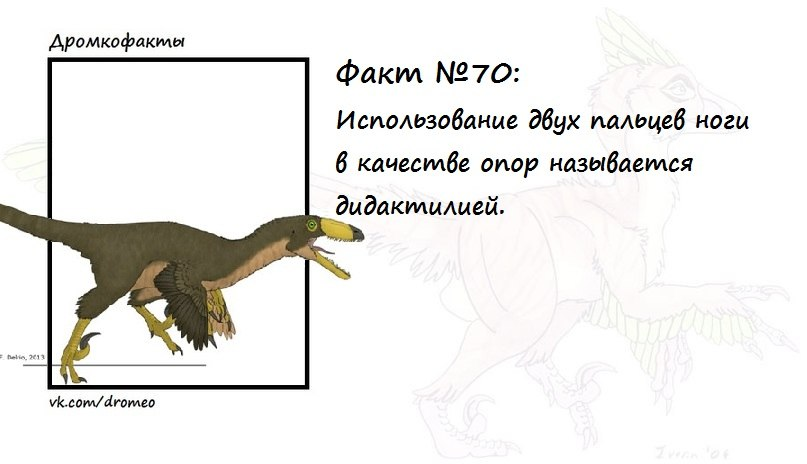 https://pp.vk.me/c625630/v625630874/16ee6/LC6c755mpa8.jpg