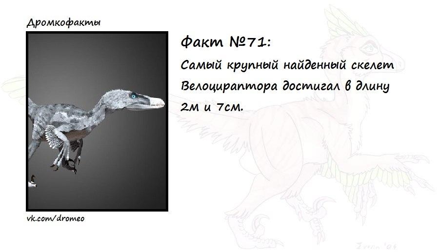 https://pp.vk.me/c625630/v625630874/17067/j7_Ob2kUWww.jpg