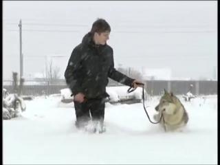 Чешский волчак. Питомник С Мыса Доброй Надежды
