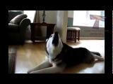 РЖАЧ ПРИКОЛЫ Животные кричат прикольные звуки подборка