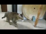 Парень придумал хитрый агрегат для кормления кошки, который заставляет её пройти целый квест