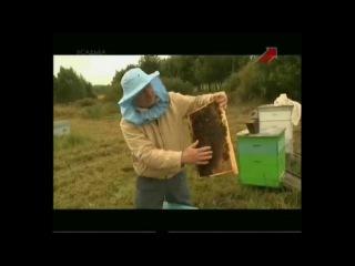 Пчеловодство для чайников. Пасека для начинающих.
