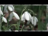 Frеdеric Chopin Nocturne 2 - Весеняя рапсодия