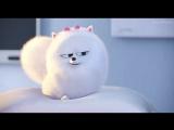 Тайная жизнь домашних животных мультфильм 2016