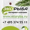 Интернет-магазин «Экорыба»