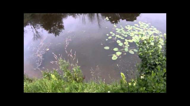 Обзор воблера TsuYoki Shkval 95sp. Поклевка щуки на воблер TsuYoki.