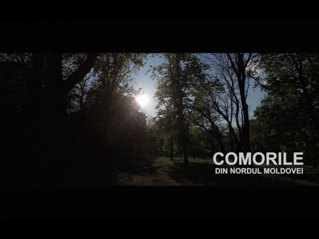 COMORILE DIN NORDUL MOLDOVEI
