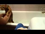 Как помыть кота-психа