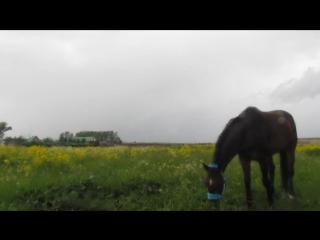 Гуляем с конём под проливным дождём :D