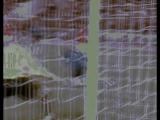 Arshavin МОЙ КЛИП САМЫЙ ПЕРВЫЙ С ЭТОГО Я И НАЧАЛ МОНТИРОВАТЬ УЧИТСЯ=)АРШАВИН НЕ УХОДИ ПЛИИИЗ