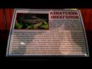 змееголов
