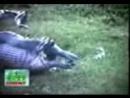 Vidmo org ZHest Anakonda vyplyunula begemota 1099321 4